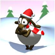 Sheep cold