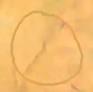 EggSpell