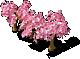 Decoration Sakura
