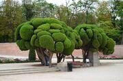 RealWorld Retiro Park Tree
