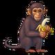 Contract Primate Tour