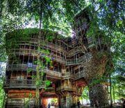 RealWorld Burgess's Treehouse