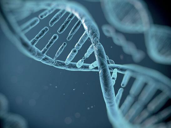 Molecular Biology and Cancer Genetics