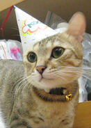 Kitten-party-hat-cat