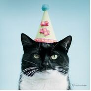 CatinPartyHat