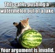 Cat watermelon lake. Argument is invalid