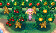 Varios árboles con fruta en Animal Crossing New Leaf