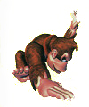 Artwork de Palmeo en Donkey Kong Country
