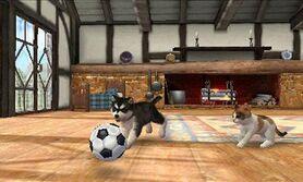 Un perro y un gato jugando en la Casa rural en Nintendogs + Cats