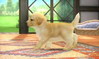 Golden Retriever en el escenario Casa Rural SSB4 (3DS)