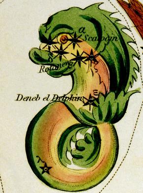 DelphinusHevelius