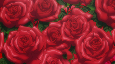 Royal Demon Rose LCA
