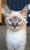 Pipsqueak (Cat)