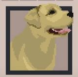 Gracy(Dog)