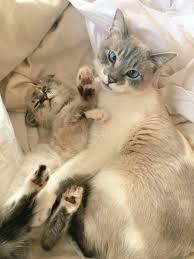 Pipsqueak (Cat) | StacyPlays Wiki | FANDOM powered by Wikia