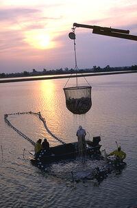 Viskwekerij