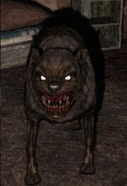 Noah's dog