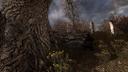 Колода возле дерева НИИ «Агропром» ЧН