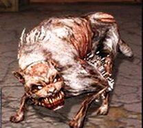 Psy Pseudo Dog