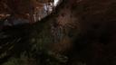 Обычный старый пень Рыжий лес ЧН