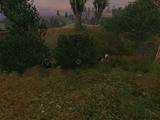 Obozowisko grupy Pietruchy