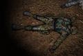Lingov dead.png
