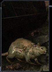 Ratwolf01