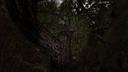 Тайник на дереве Кордон ЧН