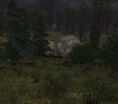 Schowek ukryty w pniu