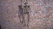 Скелет на АТП