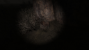 Пень у «железки» Болота ЧН
