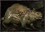 Rat-boss
