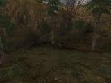 Kłoda w lesie