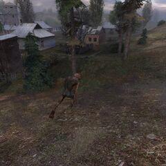 W trakcie polowania