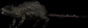 Крыса1