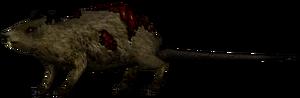Крыса2