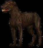Слепой пёс1
