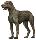 Слепой пёс4