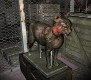 Чучело кошки в зверинце Инквизитора