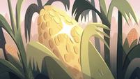 S2E12 Mewman corn sparkling bright