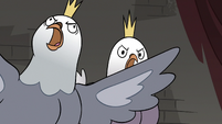 S3E20 King and Queen Pigeon squawking in anger