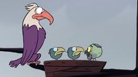S2E2 Ludo staring at the birds