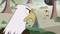 S2E10 Bald eagle watches King Butterfly run