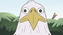 S2E10 Bald eagle staring at King Butterfly