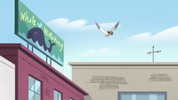 S4E27 Seagull flying past a billboard