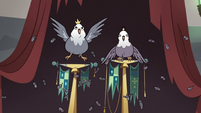 S3E20 King and Queen Pigeon with ruffled feathers