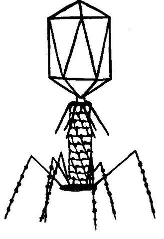 File:Image1.jpg