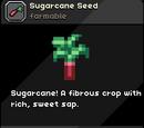 Sugarcane Seed