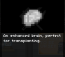 Artificial Brain