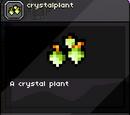 Crystal Plant Seed